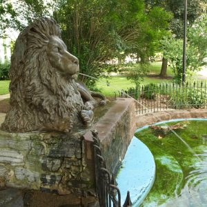 Image of Lion in the Park